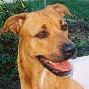 """Mary"" the shepherd-lab cross that died of abuse in Wausau"