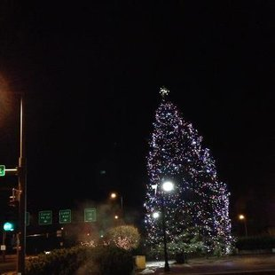 Duluth Christmas Tree