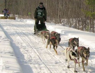 Sled dog races.