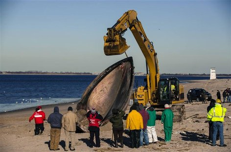 Researches use heavy machinery to perform a necropsy on a dead finback whale that had washed up on the shore of the Queens borough region of