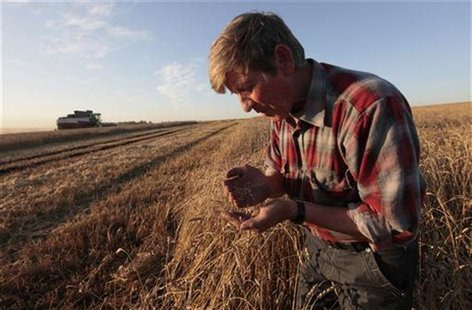 "An employee inspects wheat in a field of the ""Svetlolobovskoye"" farm outside the village of Svetlolobovo, some 390 km south of Russia's Sibe"