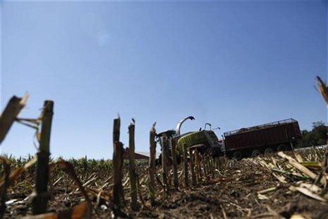 Corn harvesters chop malnourished corn due to extreme heat and drought at Sunburst Dairy in Belleville, Wisconsin September 6, 2012. REUTERS