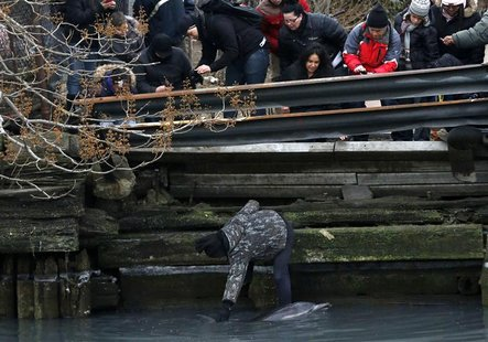 A man reaches down to pat a dolphin as it struggles along a bulkhead in the headwaters of the Gowanus Canal as others look on in Brooklyn, N