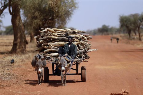 A Malian transports wood with a donkey cart on the road between Timbuktu and Douentza February 4, 2013. Picture taken February 4, 2013 REUTE