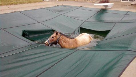 Vigo Horse 3