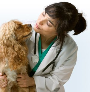 Veterinarian (courtesy of collegecrunch.net)