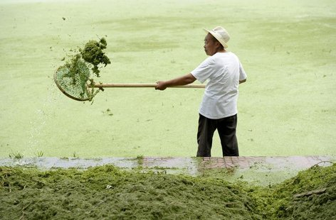 A cleaner removes algae from the algae-filled Yueya Lake in Nanjing, Jiangsu province June 8, 2012. REUTERS/Sean Yong (CHINA - Tags: SOCIETY