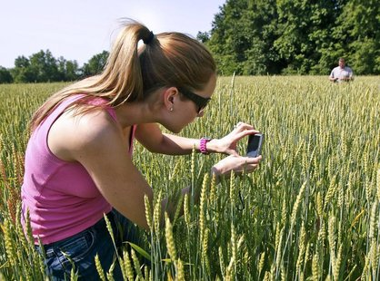 Karen Braun, a senior analyst for Lanworth Commodities, takes photographs of wheat during a study to determine how recent hail storms will e