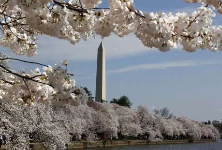 The cherry blossom trees around the Tidal Basin are in full bloom in Washington, March 19, 2012. REUTERS/Larry Downing