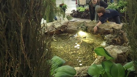 The Landscaping displays were some of the biggest draws at this year's event.  It was certainly unusual to see a coy pond in the middle of such an event.