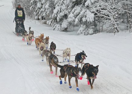 Beargrease Sled Dog Marathon