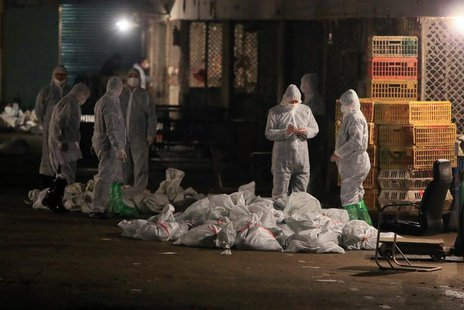 Technicians wearing protection suits begin to cull poultry at a poultry wholesale market, where H7N9 bird flu virus was detected in pigeon s