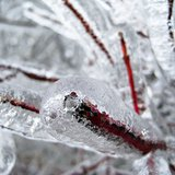 Freezing rain resulting in ice-covered trees and power lines - KELO file photo