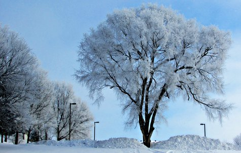 Snow covered trees in Sioux Falls, S.D. - Photo copyright Greg Belfrage