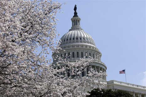 Cherry trees are in full bloom in front of the U.S. Capitol in Washington April 10, 2013. REUTERS/Yuri Gripas