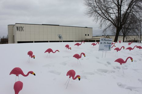 WITC Flamingos