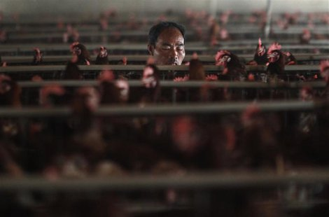 An employee works at a poultry farm on the outskirts of Shanghai April 16, 2013. REUTERS/Aly Song
