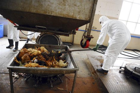 Employees dispose uninfected dead birds at a treatment plant as part of preventive measures against the H7N9 bird flu in Guangzhou, Guangdon