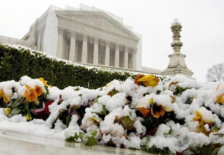 Snow covers flowers in front of the Supreme Court building in Washington, March 25, 2013. REUTERS/Jonathan Ernst