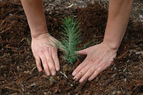 planting a tree seedling