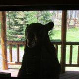 Photo of bear attacking cabin after the couple retreated inside.  Photo courtesy of Gerre Ninnemann via Fox 11 WLUK-TV