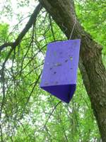 Emerald Ash Borer trap.  Photo courtesy Wisconsin DNR