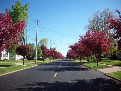 Trees along street