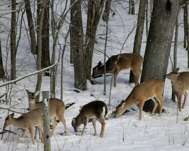 "2013 Allegan County Winter Photo Contest Youth Division winner Zach DeKraker's submission ""Winter Deer."" (photo courtesy Allegan County Tourist Council)"