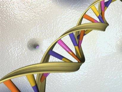 A DNA double helix is seen in an undated artist's illustration released by the National Human Genome Research Institute to Reuters on May 15
