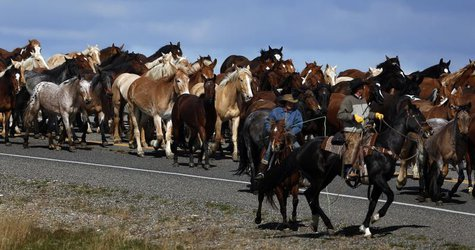 Wranglers lead a herd of wild horses during Montana Horses' annual horse drive outside Three Forks, Montana, May 6, 2012. REUTERS/Jim Urquha