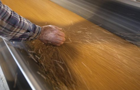 Dan Lizee, operation manager, picks up a handful of wheat off the conveyor belts that transfer wheat from trains to cargo ships at the Allia