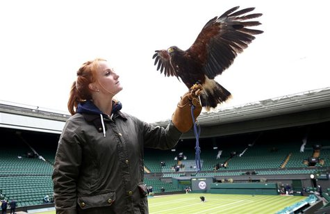 Imogen Davis poses for a photograph with Rufus, a Harris Hawk used at the Wimbledon Tennis Championships to scare away pigeons, in London Ju