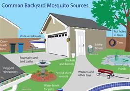 mosquitographic.jpg
