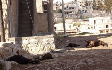 Animal carcasses lie on the ground, killed by what residents said was a chemical weapon attack on Tuesday, in Khan al-Assal area near the no