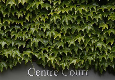 Ivy grows above a Centre Court sign on the first day of the Wimbledon Tennis Championships, in London June 24, 2013. REUTERS/Eddie Keogh