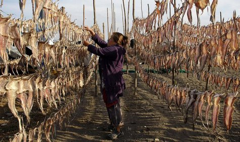 A resident collects dried fish, to be sold at the market, outside her home in Coronel town, some 550 km (335 miles) southwest of Santiago Ma