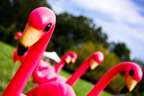 Pink flamingo (Photo courtesy of Ryan Hyde)