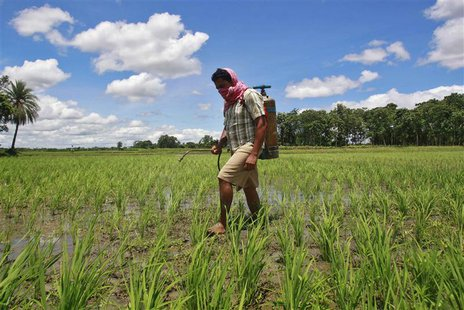 A farmer sprays pesticide containing monocrotophos on a paddy field at Mohanpur village, about 45 km (28 miles) west of Agartala, capital of