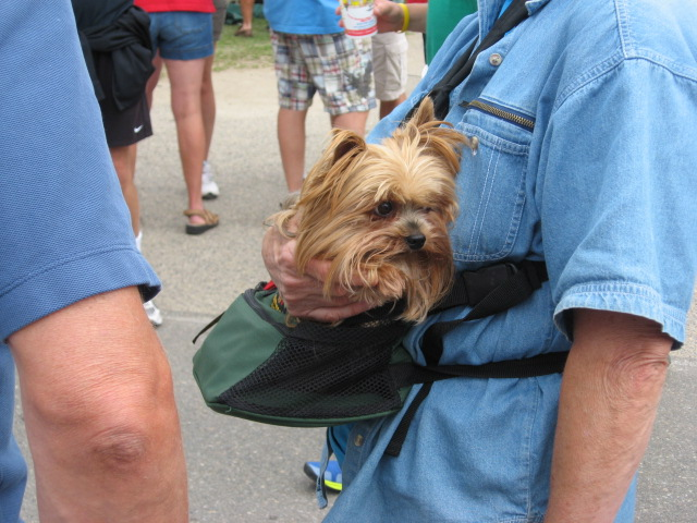 Even a puppy pouch was seen in Dorset.