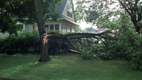 Tree down in a yard in Kaukauna after storms rolled through on August 7, 2013. (Photo by: Jeff Flynt).