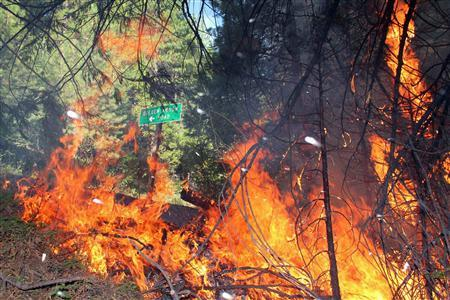 Fire on Highway 120 near Golden Arrow Road is shown at the Rim Fire in this undated United States Forest Service handout photo near Yosemite National Park, California, released to Reuters August 27, 2013.  REUTERS/Mike McMillan/U.S. Forest Service/Handout via Reuters