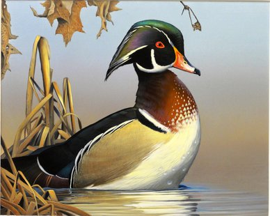 2014 Waterfowl Stamp by Caleb Metrich of Lake Tomahawk