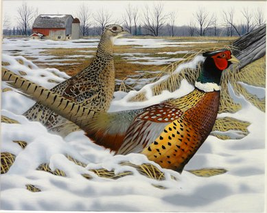 2014 Pheasant Stamp by Caleb Metrich of Lake Tomahawk