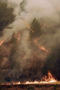 A small but fast-growing brush fire near Mount Diablo State Park, northeast of San Francisco.REUTERS/Robert Galbraith