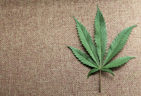 A marijuana leaf is displayed at Canna Pi medical marijuana dispensary in Seattle, Washington, November 27, 2012. REUTERS/Anthony Bolante