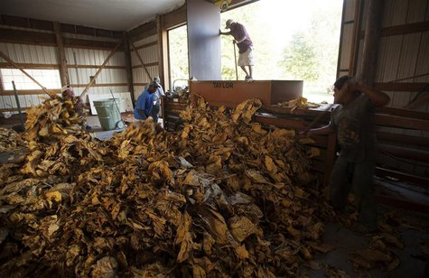 Workers bundle flue-cured tobacco at Shelly Farms in the Pleasant View community of Horry County, South Carolina July 26, 2013. REUTERS/Rand