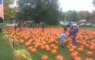 Harvestfest 2013 6
