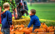 "Wausau Events' ""Harvest Fest"" 2013: Cover Image"