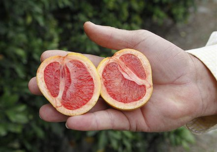 A grove manager holds a malformed star ruby grapefruit affected by 'greening', an insect-borne bacterial disease in a grove in Vero Beach, F