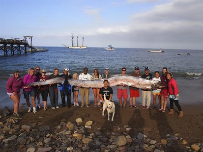 The crew of sailing school vessel Tole Mour and Catalina Island Marine Institute instructors hold an 18-foot-long oarfish that was found in
